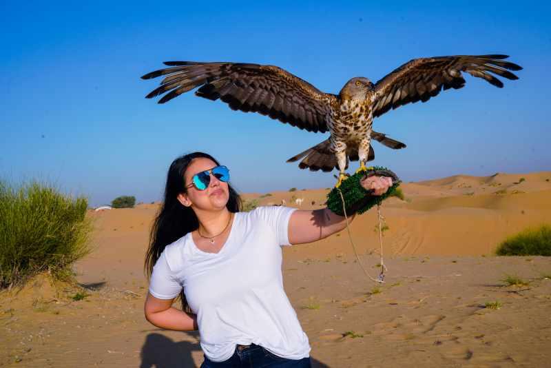 sunrise desert safari falcon picture