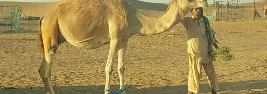 morning-desert-safari-850x300