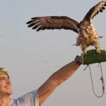 falcon experience with desert safari tours