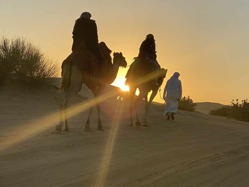Why Should You Ride a Camel in Desert Safari